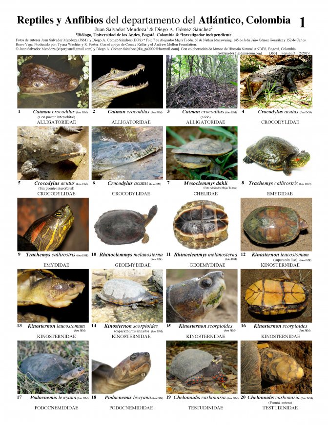 353_colombia_amphibians_and_reptiles_of_atlantico_v3.pdf