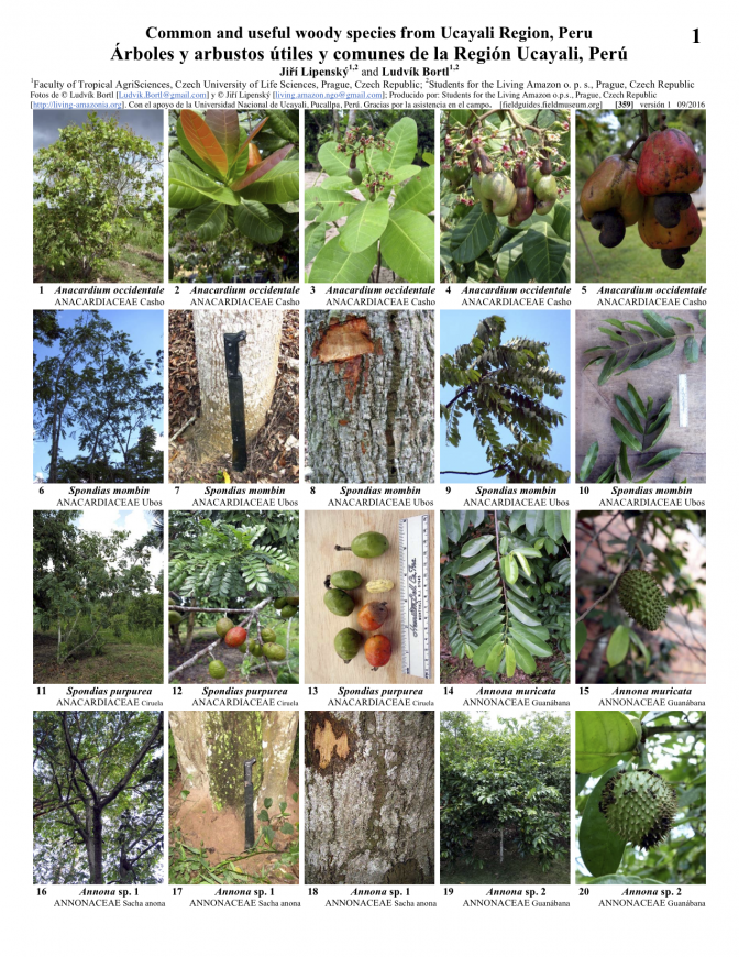 359_common_and_useful_woody_species_of_ucayali.pdf