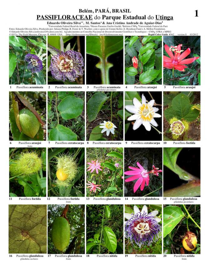 Pará -- Passifloraceae do Parque Estadual do Utinga