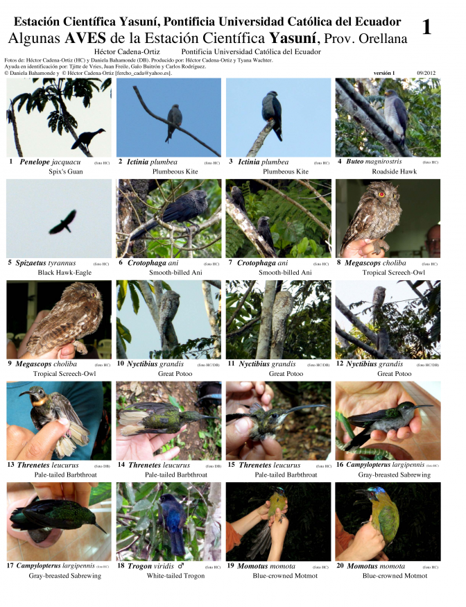Orellana Province -- Birds of Yasuní Scientific Station