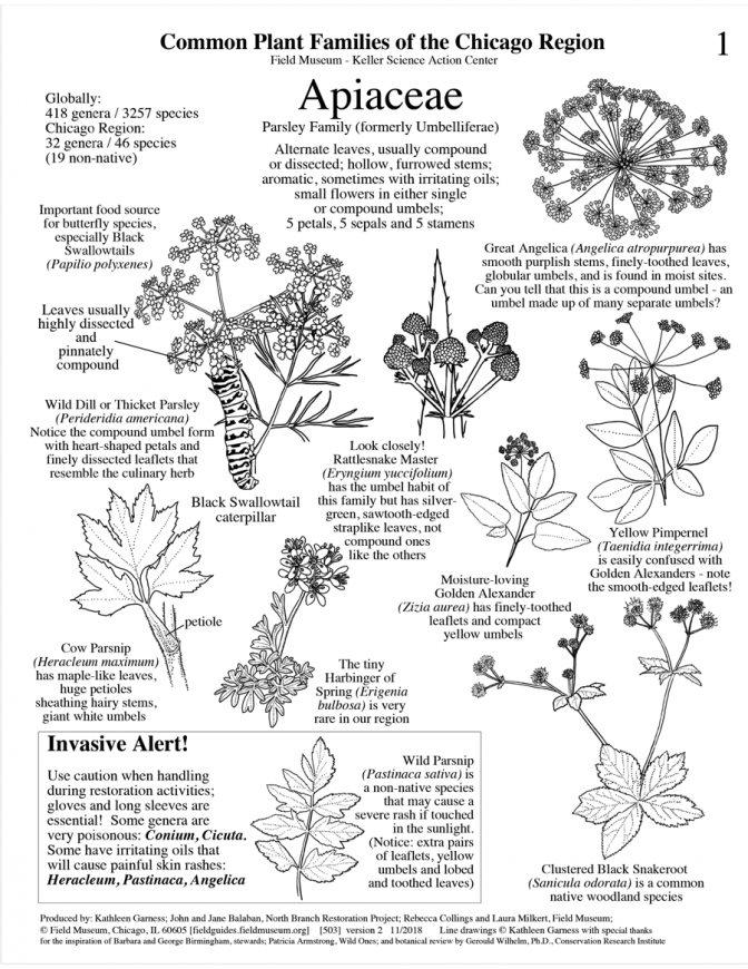 503_usa_common_plants_of_the_chicago_region-version2.pdf