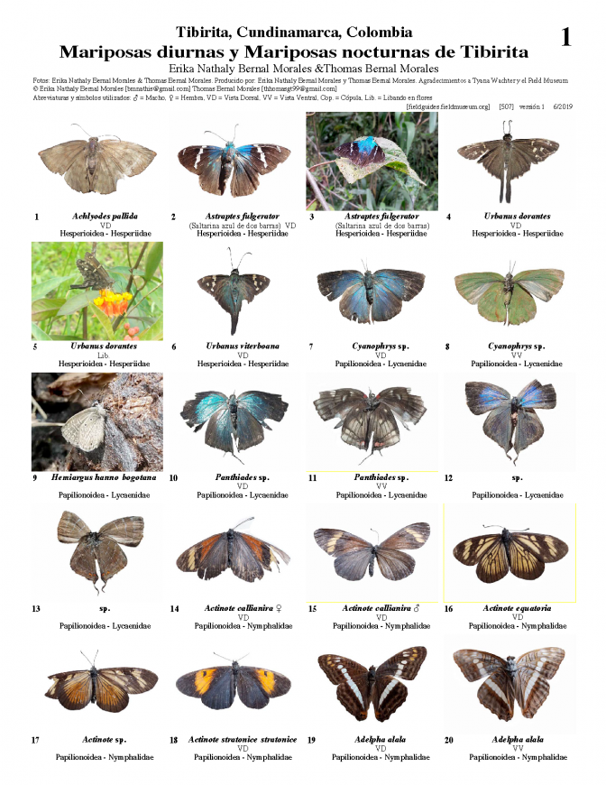 507_colombia_diurnal_butterflies_and_night_moths_of_tibirita.pdf