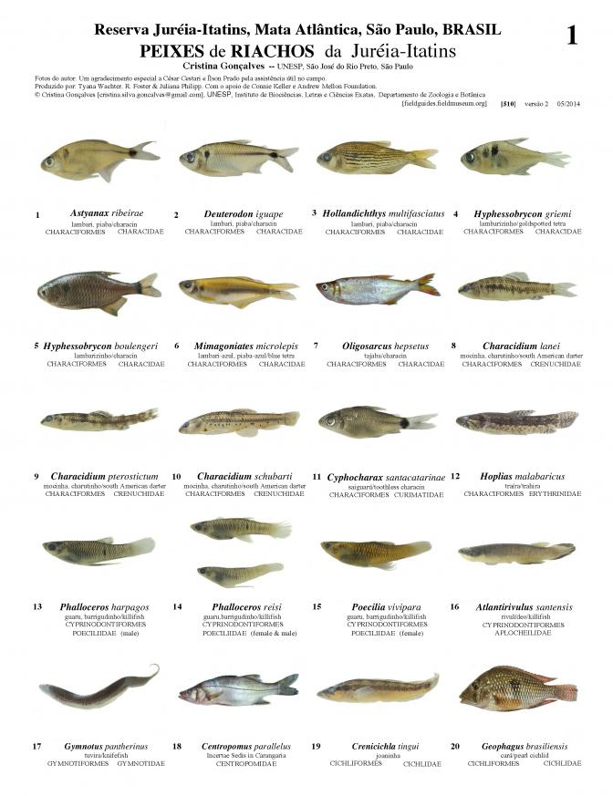 510_brazil_fishes_of_jureia-itatins_reserve.pdf