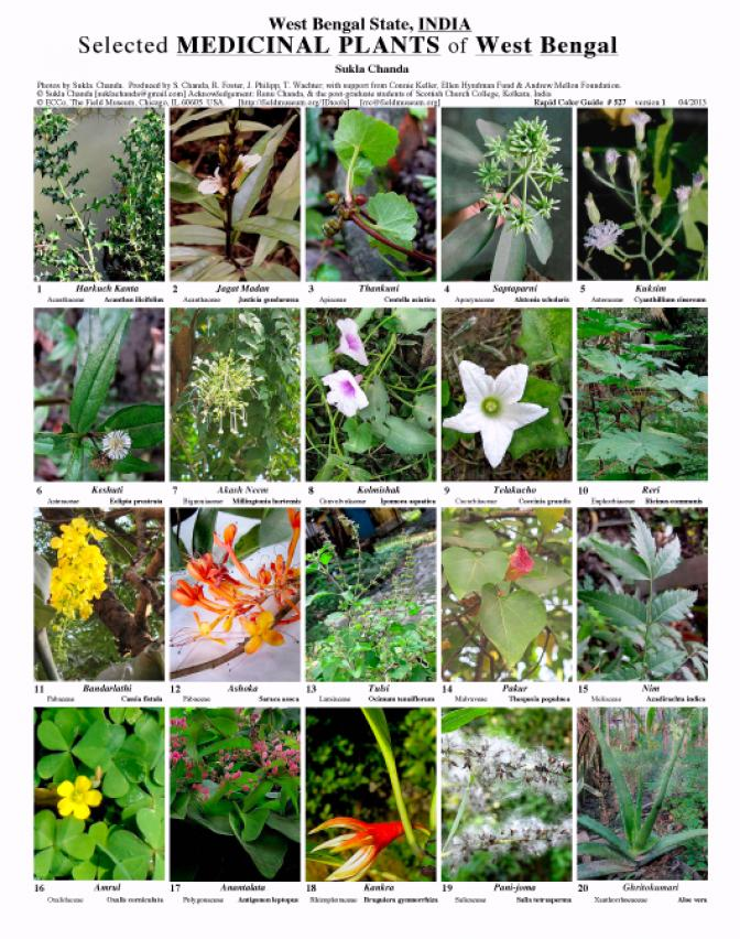 Selected medicinal plants of West Bengal | Field Guides