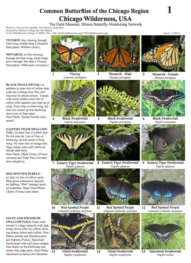 Common Butterflies of the Chicago Region