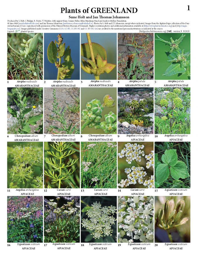 548_plants_of_greenland_version_3.pdf