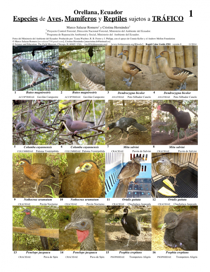 Orellana--Birds, Mammals & Reptiles subject to Trafficking