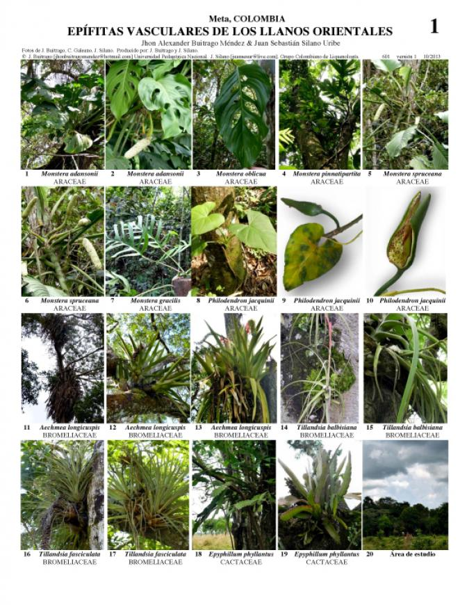 Plants on Plants – The Biology of Vascular Epiphytes