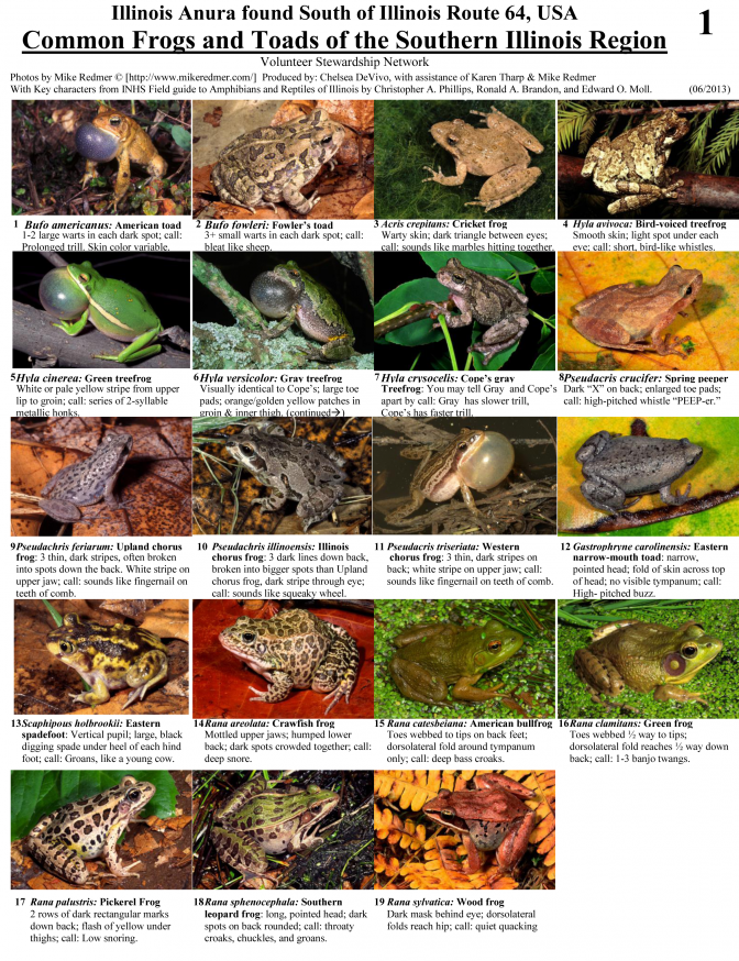 Common Frogs and Toads of the Southern Illinois Region