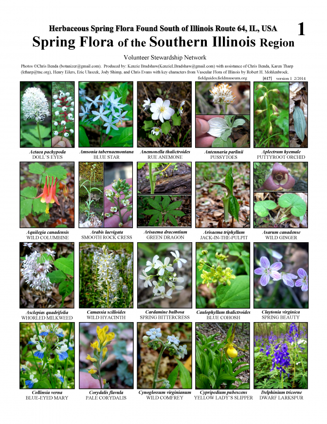 617_usa_spring_flora_of_the_southern_illinois.pdf