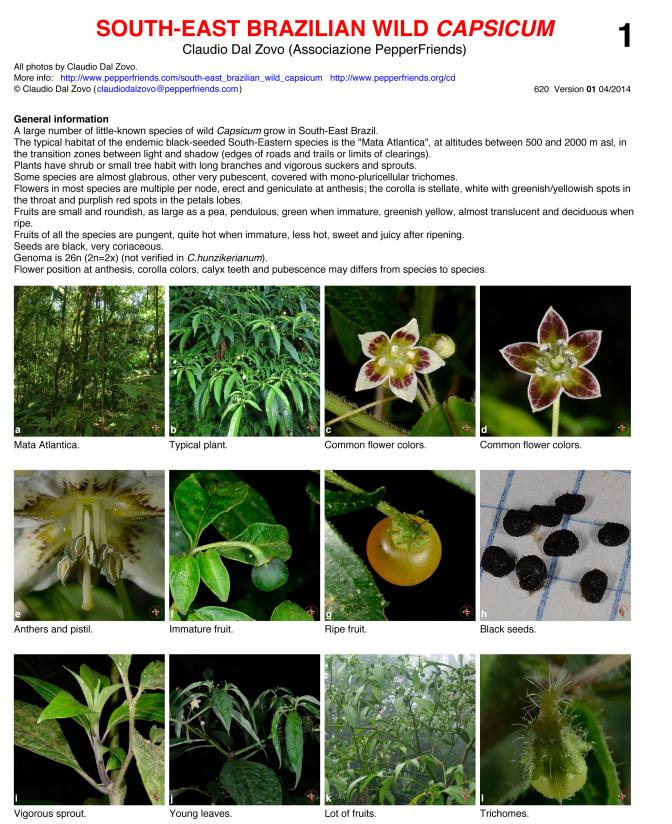 South-East Brasil -- Wild Capsicum