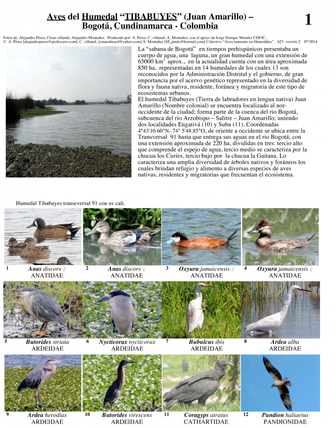 Cundinamarca -- Aves del Humedal Tybabuyes