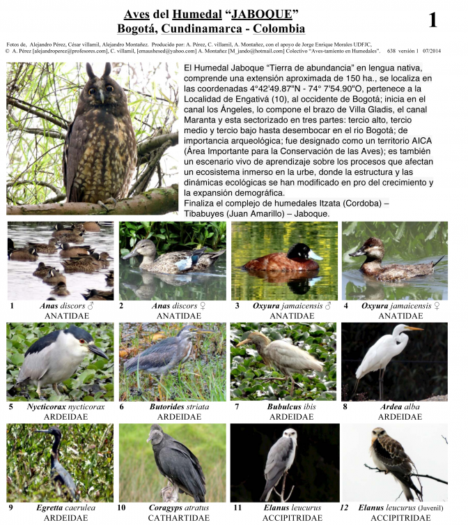 Cundinamarca -- Birds of Humedal Jaboque