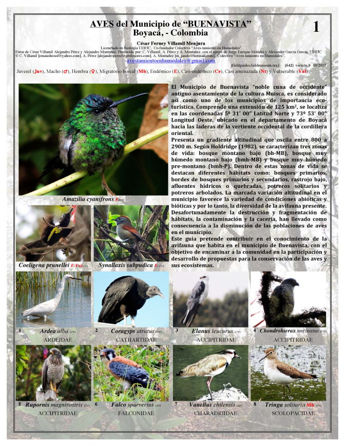 Boyacá -- Birds of Buenavista