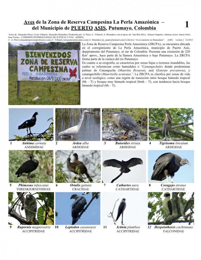 Putumayo -- Birds of Puerto Asis