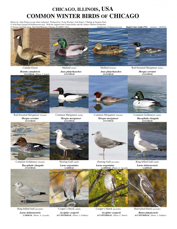 723_usa_winter_birds.pdf