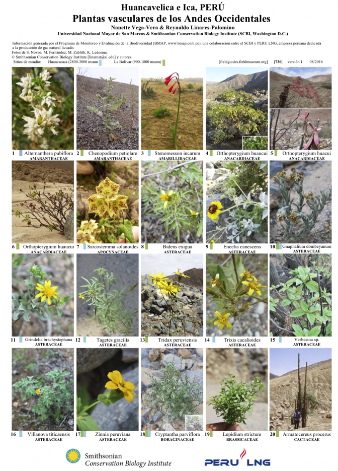 736_peru_plantas_de_los_andes_occidentales