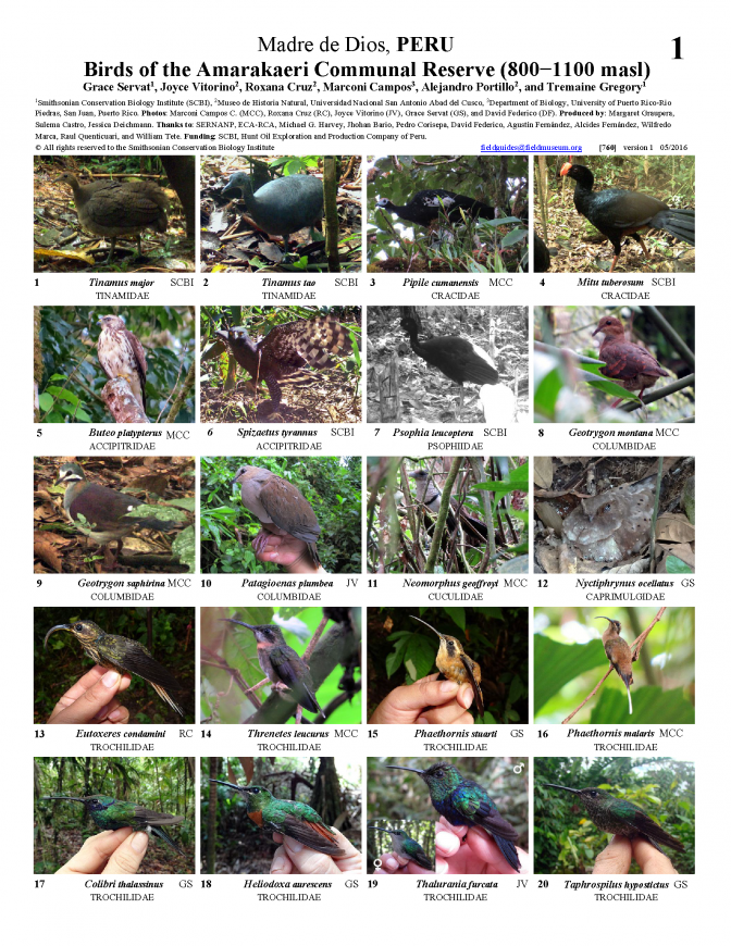 760_peru-birds_of_amarakaeri.pdf