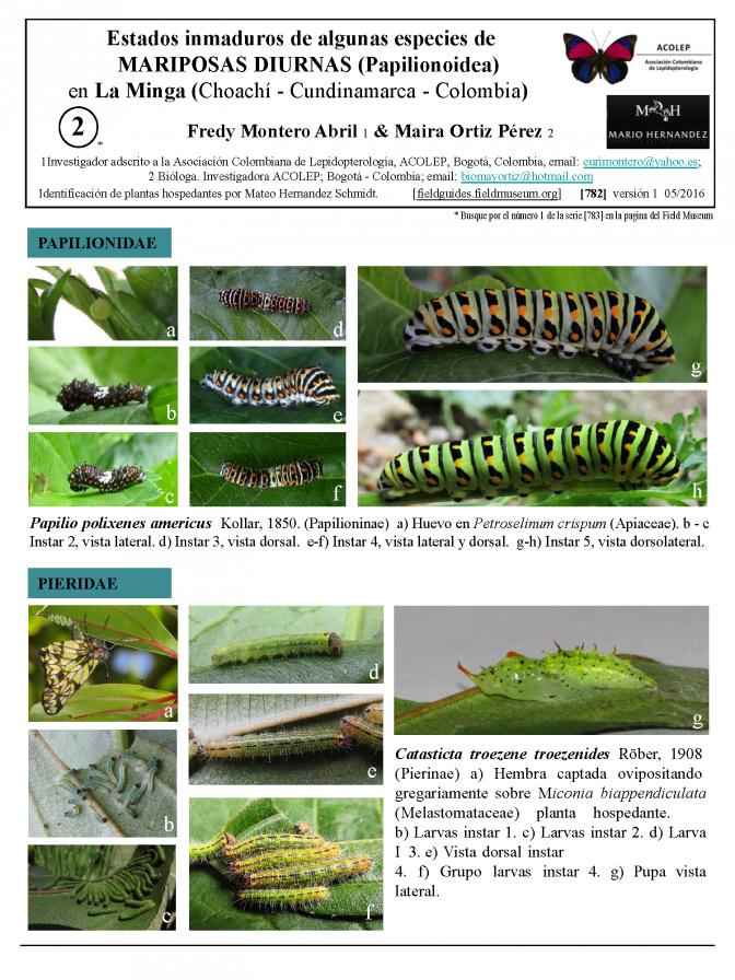 782_colombia-caterpillars_of_la_minga.pdf