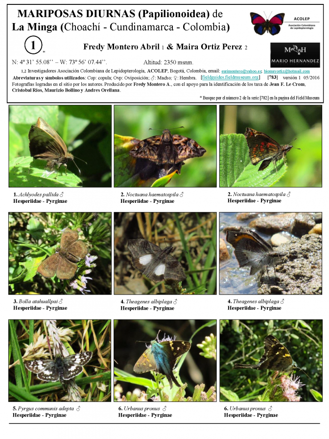 783_colombia-butterflies_of_la_minga.pdf