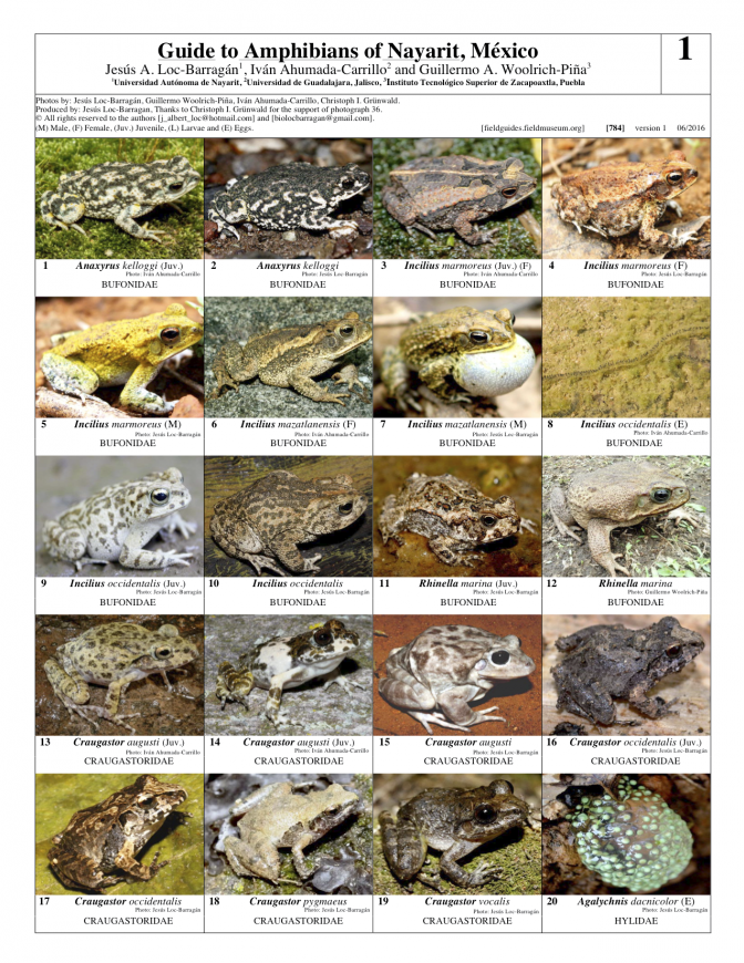 784_mexico_amphibians_of_nayarit_a2.pdf