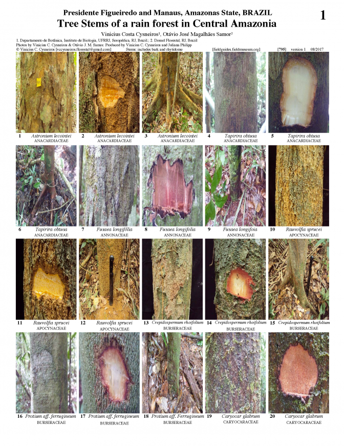 795_brazil-tree_stems_of_amazonas_state.pdf