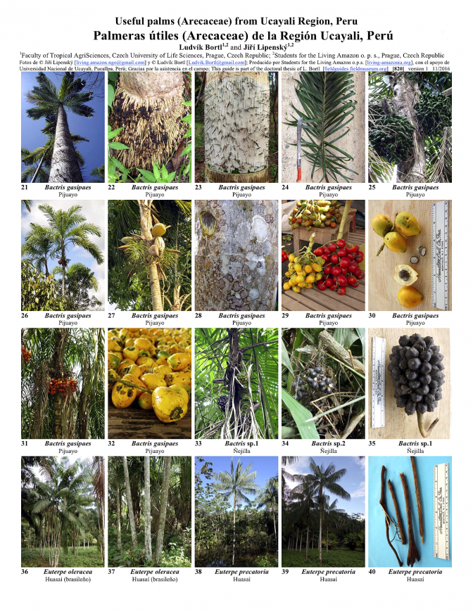 820_peru-useful_palms_from_ucayali.pdf