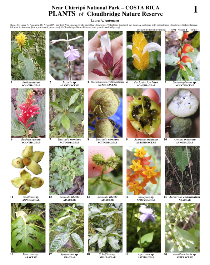 839_cosa_rica_plants_of_cloudbridge_nature_reserve.pdf