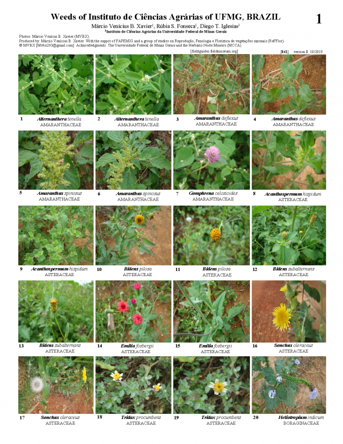 841_brazil_weeds_of_ufmg.pdf