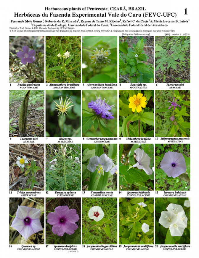 852_brazil_herbaceous_plants_of_curu_valley.pdf
