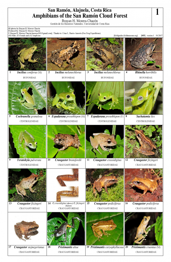 855_costa_rica_amphibians_of_san_ramon.pdf