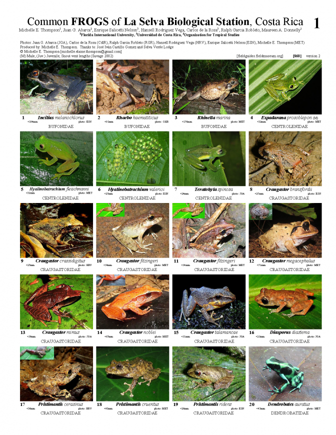 860_costa_rica_frogs_of_la_selva_station.pdf