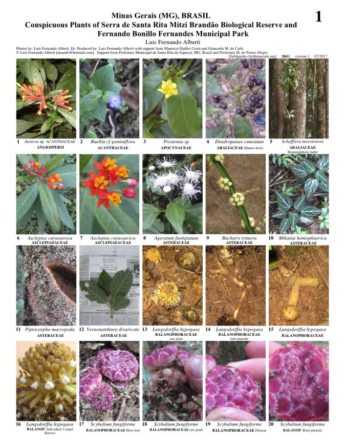 861_brazil_conspicuous_plants_s_rita_and_bonillo_park.pdf