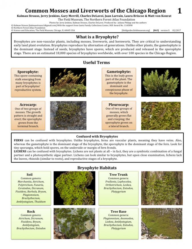 865_usa_mosses_and_liveworts_of_chicago.pdf