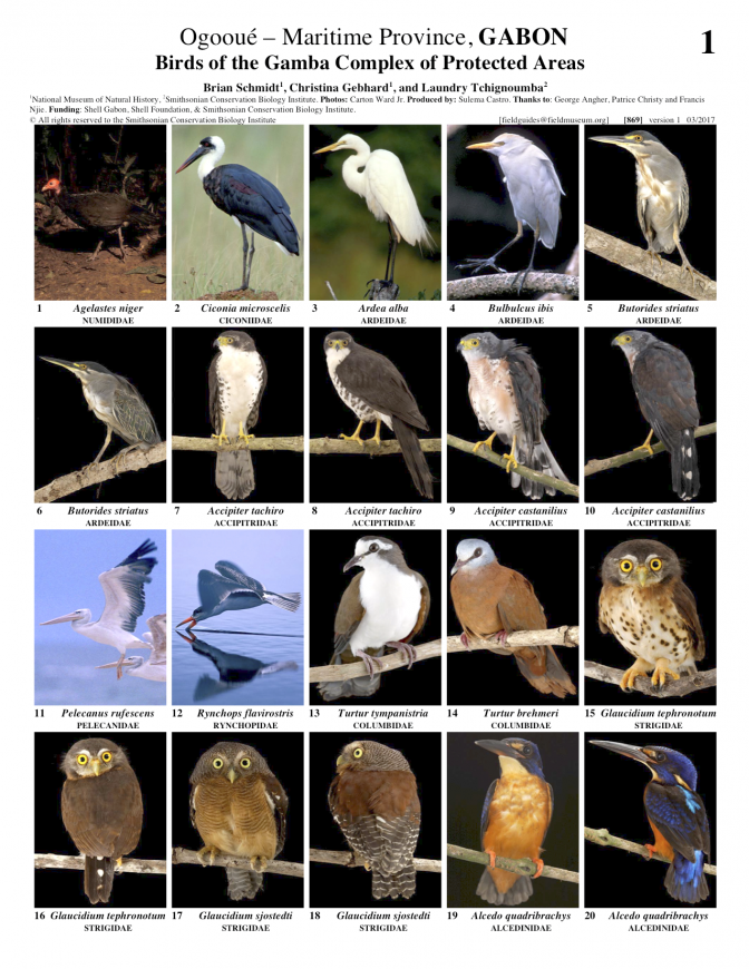 869_gabon_birds_of_gamba_complex.pdf