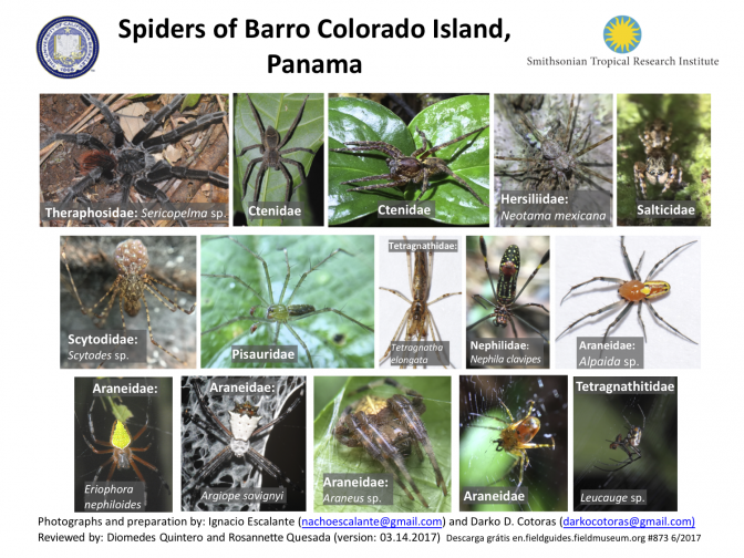 873_panama_spiders_of_barro_colorado.pdf