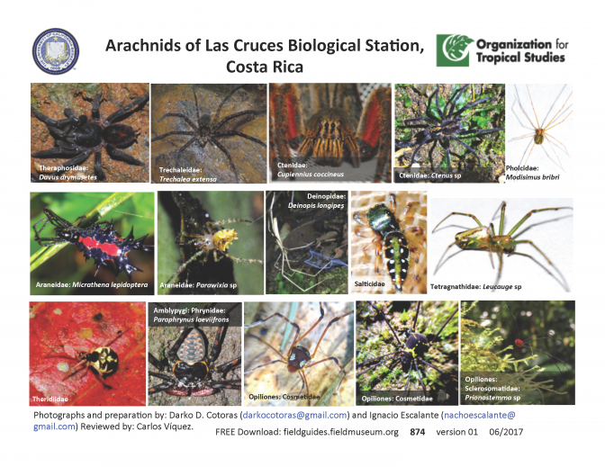 874_costa_rica_las_cruces_spiders.pdf
