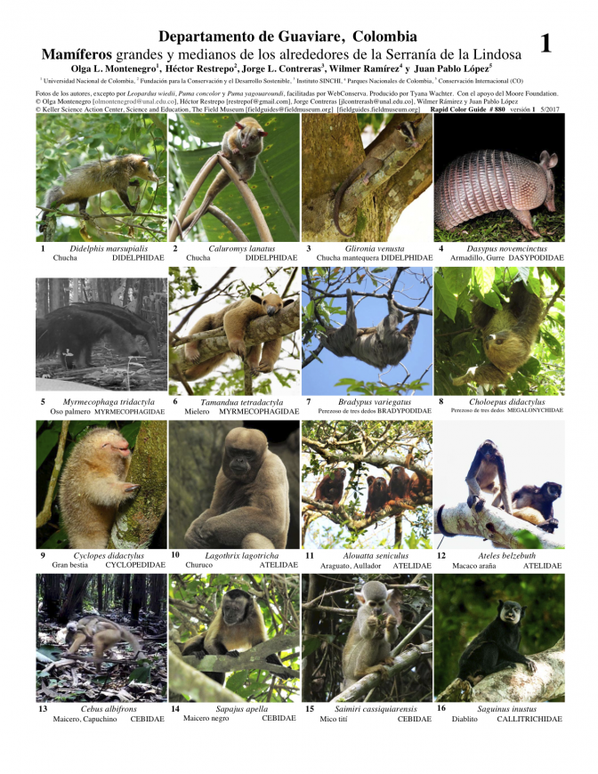 880_colombia_mammals_of_guaviare.pdf