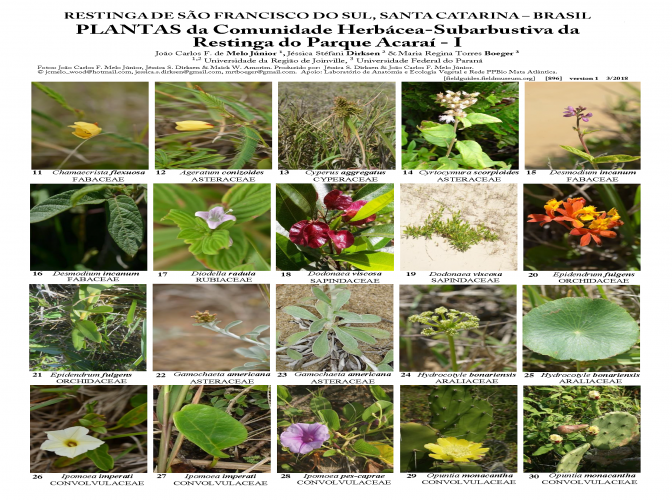 896_brazil_plants_of_acarai_park_sta_catarina.pdf