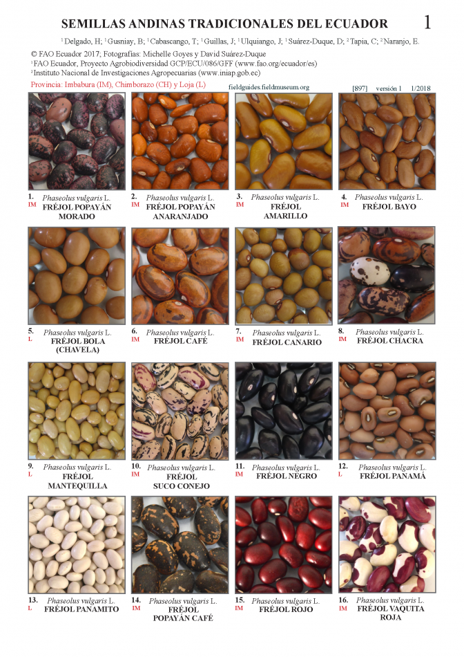897_andean_seeds_of_ecuador.pdf