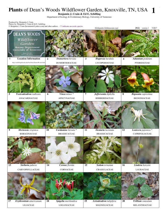 912_usa_plants_of_deans_woods.pdf
