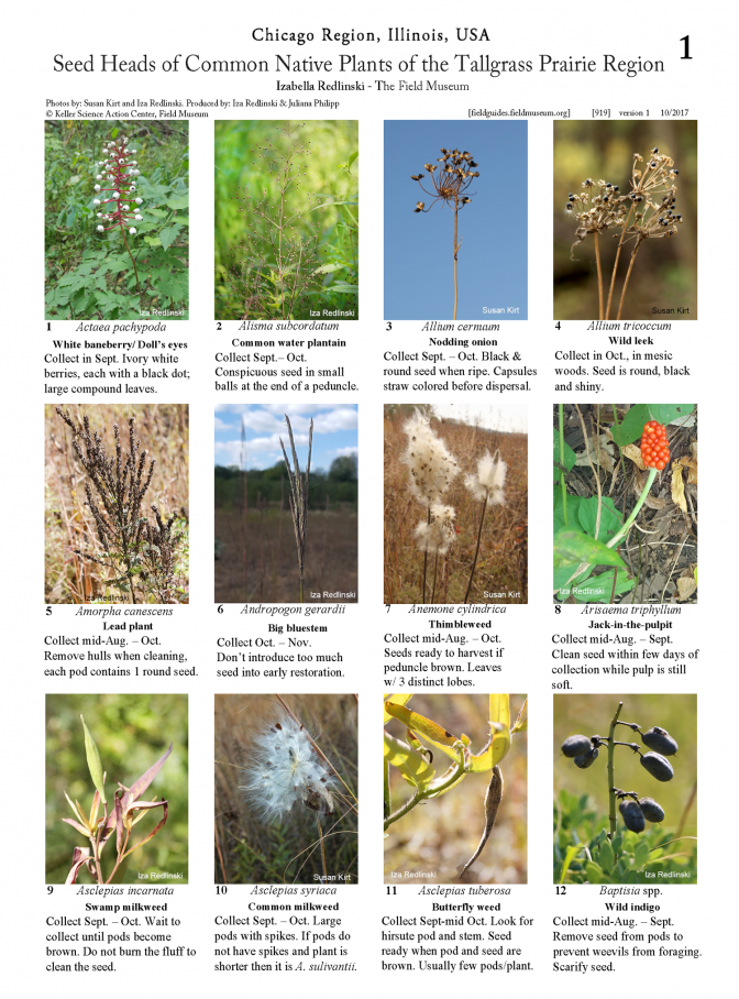 919_usa_prairie_seed_heads-version_2.pdf