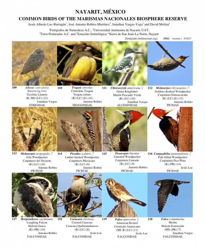 921_mexico_common_birds_of_marismas_nacionales.pdf
