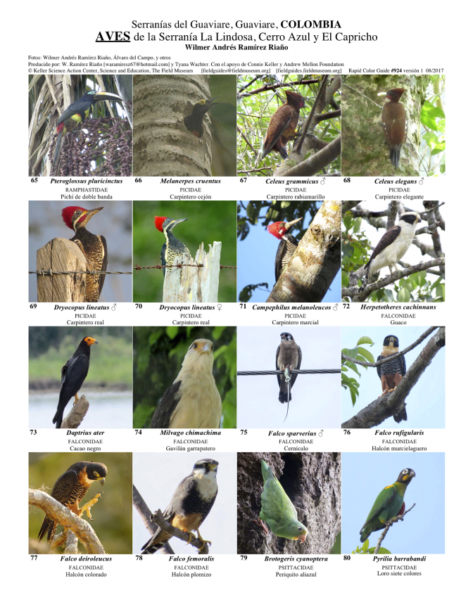 924_colombia_aves_of_guaviare.pdf