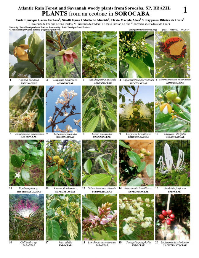 933_brazil_plants_of_sorocaba_sp.pdf