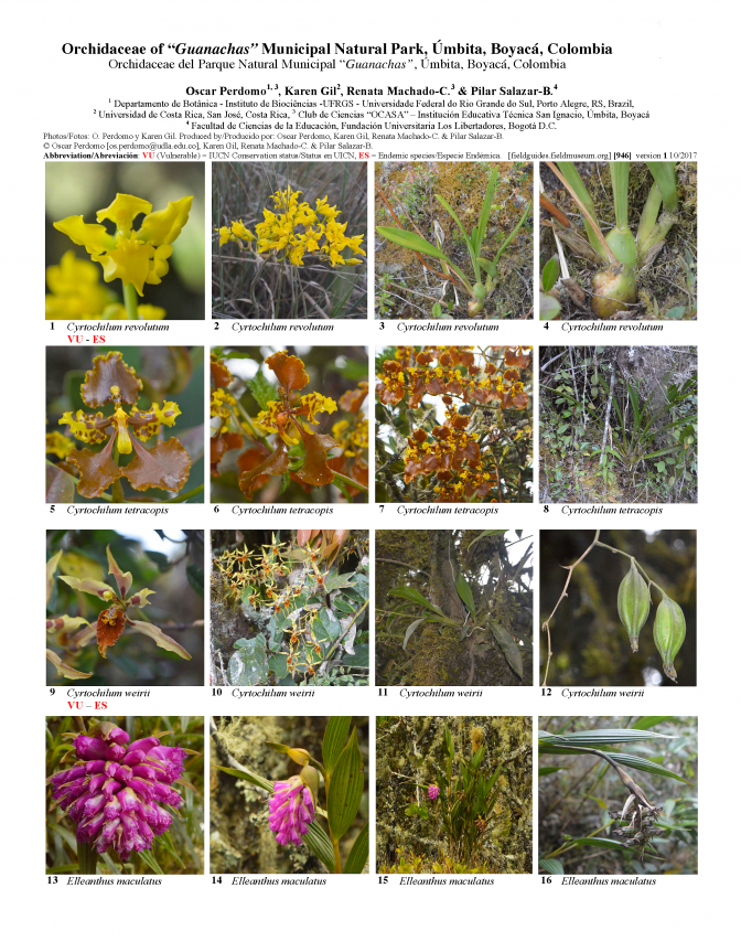 946_colombia_orchids_of_guanachas.pdf