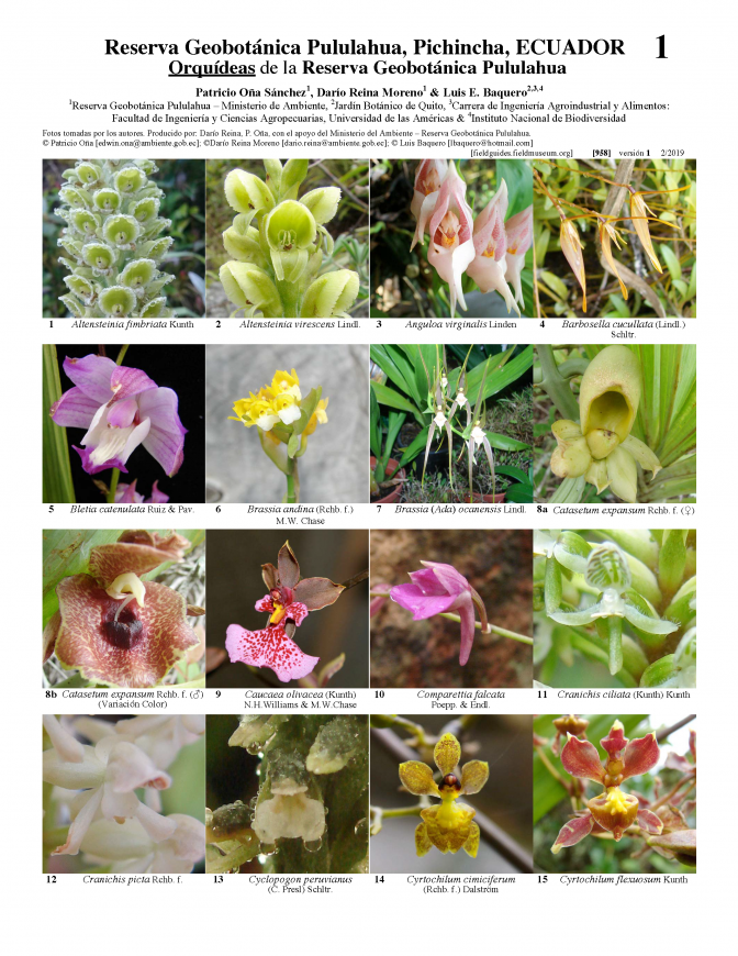 958_ecuador_orchids_of_the_pululahua_geobotanical_reserve.pdf