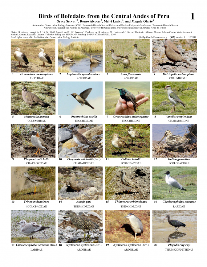 967_peru_birds_of_bofedales_from_central_andes.pdf