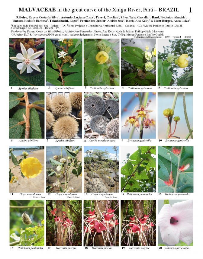 970_brazil_malvaceae_of_the_xingu_river.pdf