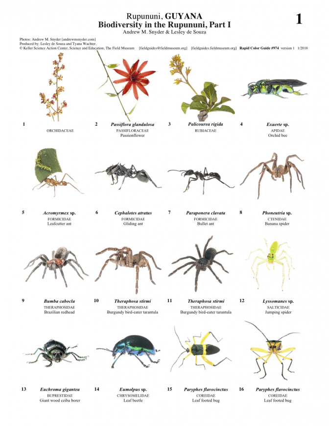 974_guyana_biodiversity_in_the_rupununi_1.pdf